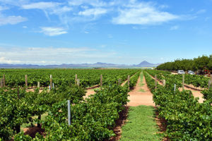 lescombes family vineyard is located near lordsburg just inside grant county
